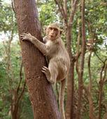 Funny monkey — Stock Photo