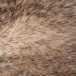 Badger fur — Stock Photo