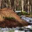 Stock Photo: Anthill in forest