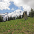 Mt. Rainier hillside — Stockfoto #13431918