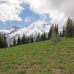 Mt. rainier stok — Zdjęcie stockowe