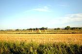 Hay field — Stockfoto