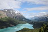 Peyto Lake Canadian Rockies — Stock Photo