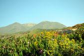 Coastal wildflowers — Stock Photo