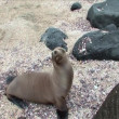 Stock Video: Sealion on Galapagos Islands