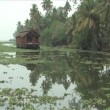Stock Video: Houseboat trip through backwaters mase of waterways in Alleppey, India