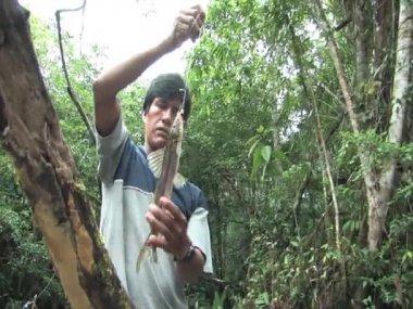 Amazon Man caught a fish — Stock Video