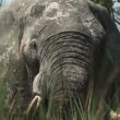 Elephants Okavango Delta, Botswana — Stock Video
