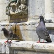 Stock Photo: Two pigeons
