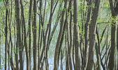 Trunks of trees — Stock Photo
