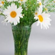 Stock Photo: White daisies