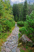 Stone trail — Stock Photo