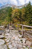 γέφυρα στο δάσος — Φωτογραφία Αρχείου