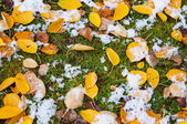 Fallen leaves — Foto Stock