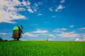 Green grass and mill — Stock Photo