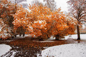 Piękne drzewo — Zdjęcie stockowe