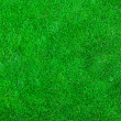Green grass — Photo #30810433