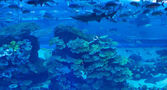 Aquarium at Dubai Mall — Stock Photo