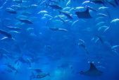 Aquarium au centre commercial dubai mall — Foto Stock
