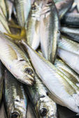 Spanish Mackerel — Stock Photo
