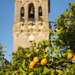 Spanish oranges and Bell Tower — Stock Photo #18640707