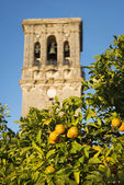 Spanish oranges and Bell Tower — Stock Photo