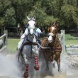 Horse Driving (doubles) — Stock Photo
