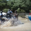 Stock Photo: Horse Driving (doubles)