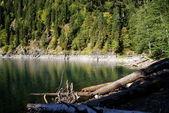 Rizza берега озера — Стоковое фото