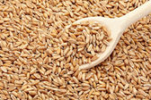 Wheat cereals diet food — Stock Photo