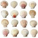 Seashel sea life marine — Stock Photo #13621528