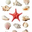 Seashel sea life marine — Stock Photo