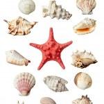 Seashel sea life marine — Stock Photo #13629315