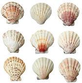 Seashel sea life marine — Stock Photo