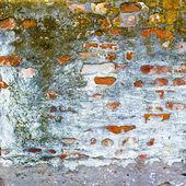 Textuur bakstenen muur met schimmel — Stockfoto