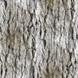 Stock Photo: Seamless texture white tree bark wallpaper background