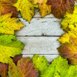 Stock Photo: Autumn Period texture of leaves and wood