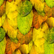 Seamless texture of autumn yellow leaves — Stock Photo