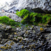 Natural texture of the cave with moss and cobwebs — Stock Photo
