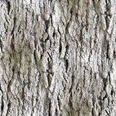 Seamless texture white tree bark wallpaper background — Stock Photo
