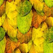 秋の黄色のシームレスなテクスチャを葉します。 — ストック写真