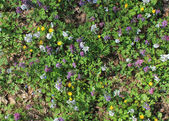 Wild flowers in spring background — Stock Photo