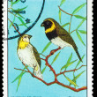 CUBA - CIRCA 1977: A Stamp printed in CUBA, shows bird Tiaris ca — Stock Photo