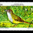 CUBA - CIRCA 1978: A stamp printed by Cuba, shows bird zapata sp — Stock Photo