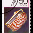 GRENADA - CIRCA 1978: A Stamp printed in GRENADA, sea shell zebr - Stock Photo