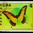 CUBA - CIRCA 1972: A stamp printed in Cuba, shows butterfly with — Stock Photo