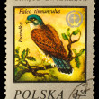 Royalty-Free Stock Photo: POLSKA - CIRCA 1975 : A Stamp printed in POLAND, shows image of