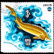 USSR - CIRCA 1975: A Stamp printed in USSR, shows fish Sturgeon, — Stock Photo