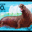 USSR - CIRCA 1978: A Stamp printed in USSR, shows image sea elep — Stock Photo #15879185