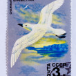 Stock Photo: USSR - CIRCA 1978: A Stamp printed in USSR, shows image of white